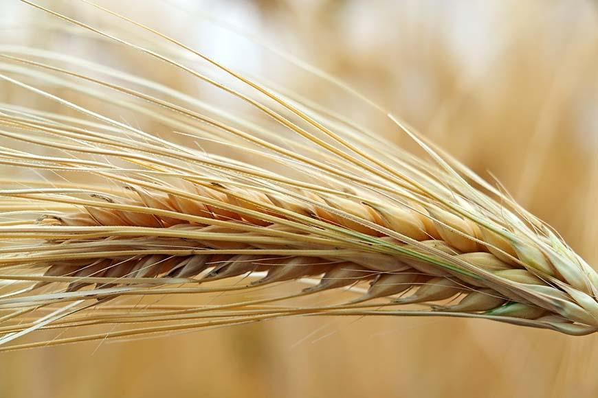 Alimenti biologici nelle scuole: tutte le regole da seguire